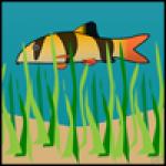 Pesce Nuotante
